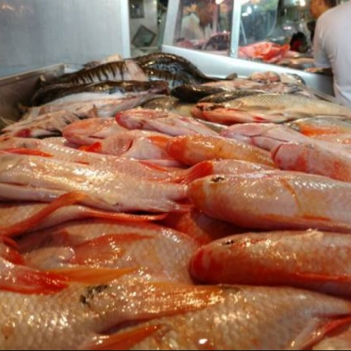 Producción mundial de pescado se incrementó en 2.3 por ciento en el 2017