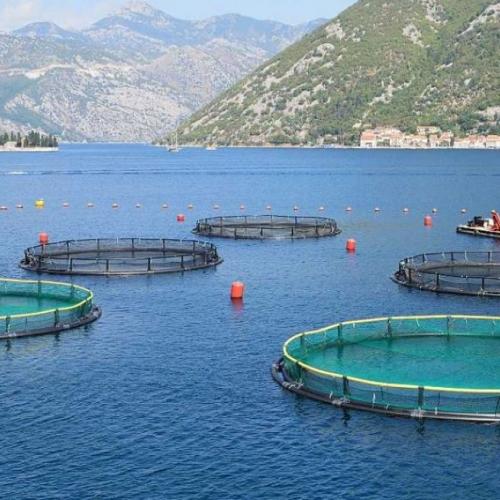 La producción de acuicultura sigue aumentando cada año